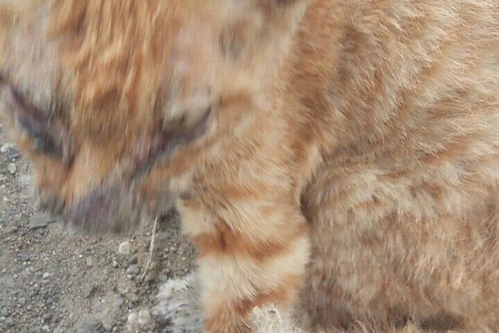 Кошки ищут добрых хозяев и уютный дом) Кошечка, 1 мес,чудом выжила после пожара. Живет на улице. Звоните 89144465121 Галина