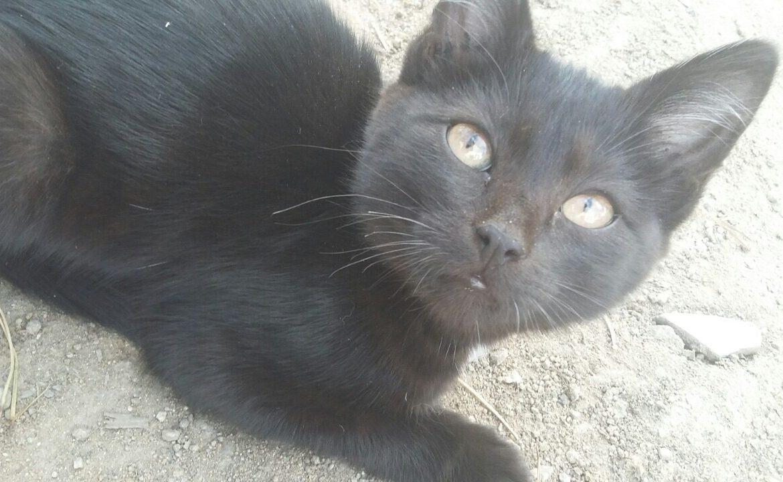 Кошки ищут добрых хозяев и уютный дом) Кот, 1-1,5 мес. Живет на улице. Звоните 89144465121 Галина