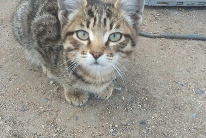 Кошки ищут добрых хозяев и уютный дом) Кот, 1,5 мес. Живет на улице. Звоните 89144465121 Галина