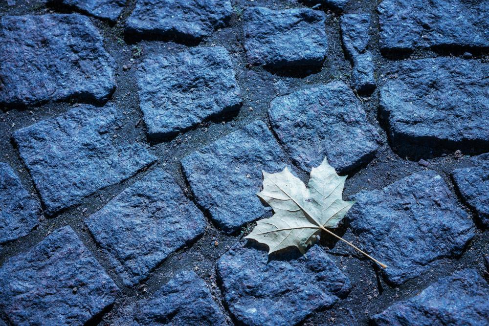 Кленовый лист на фоне каменной дороги тонированный синий